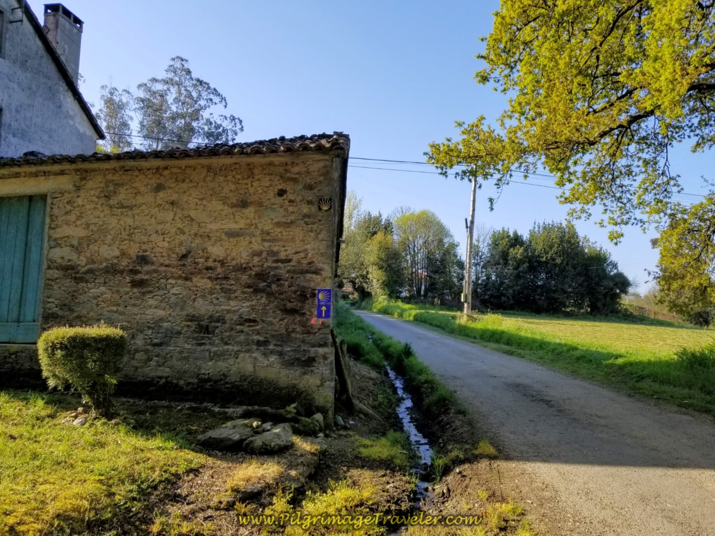 Walking on Lane Towards O Outeiro on day seven of the Camino Inglés