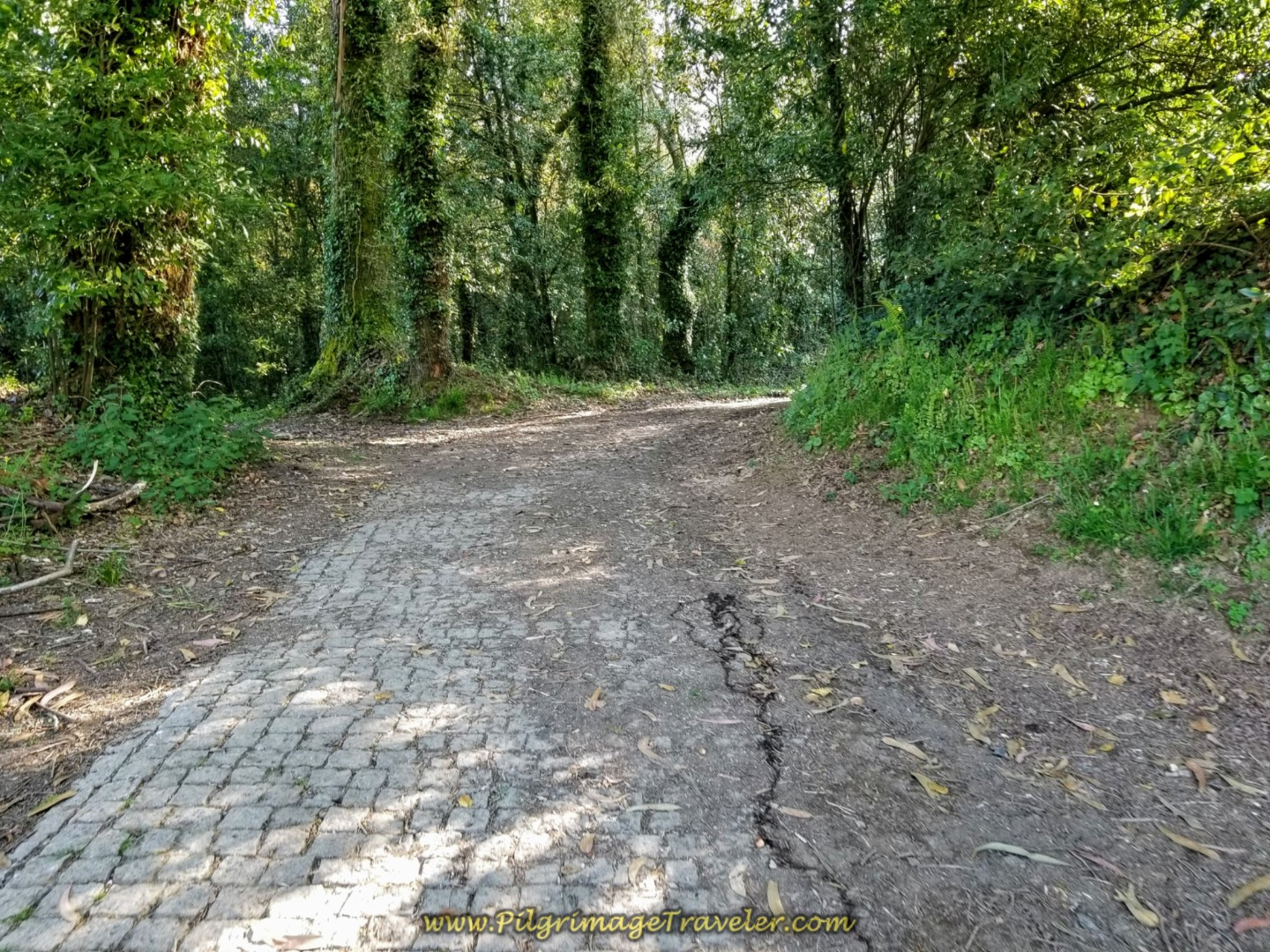 Yet Another Section of Country Lane Into Forest on day seven of the Camino Inglés
