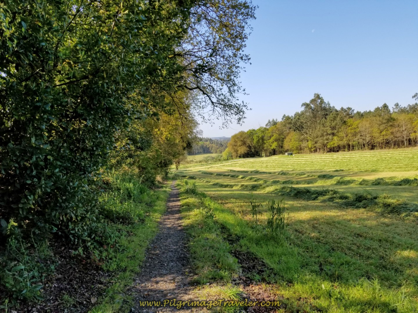 Tractor Lane Walks By Fields on day seven of the Camino Inglés