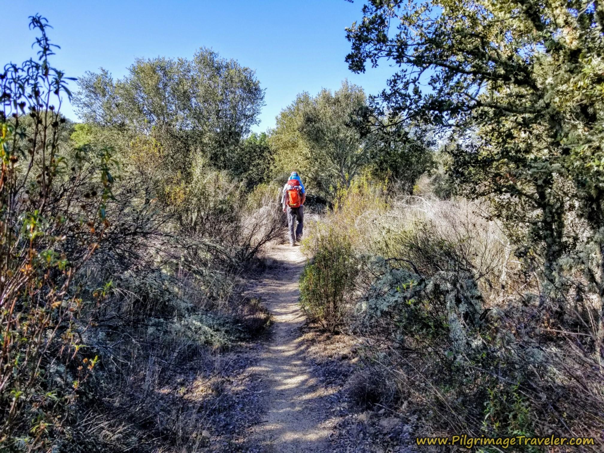 Follow Rough Trail