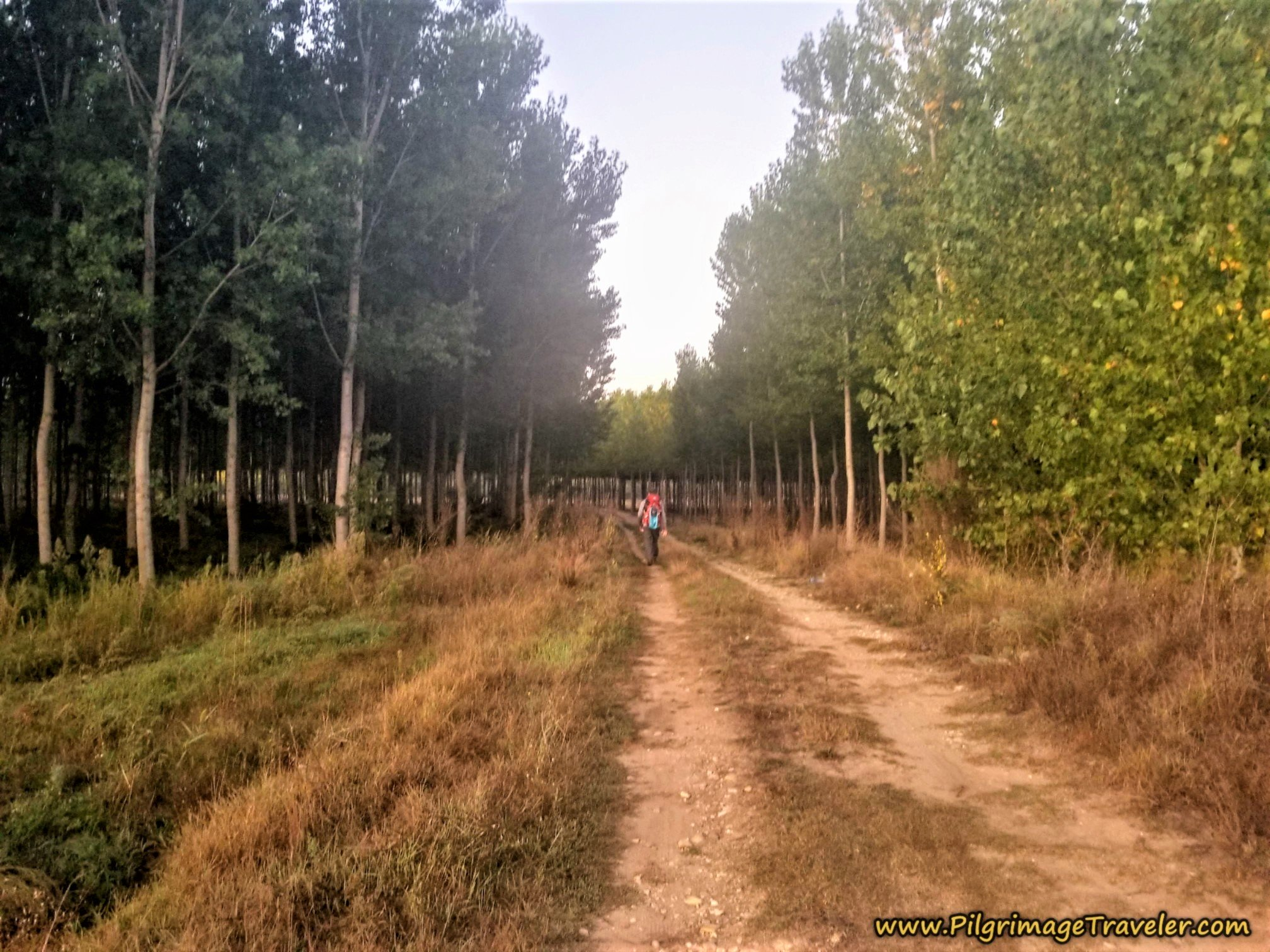 Walking Through Cultivated Forests