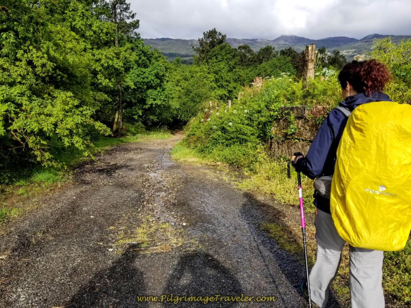 Miriam Walks Back Into the Forest on day twenty on the central route of the Portuguese Camino