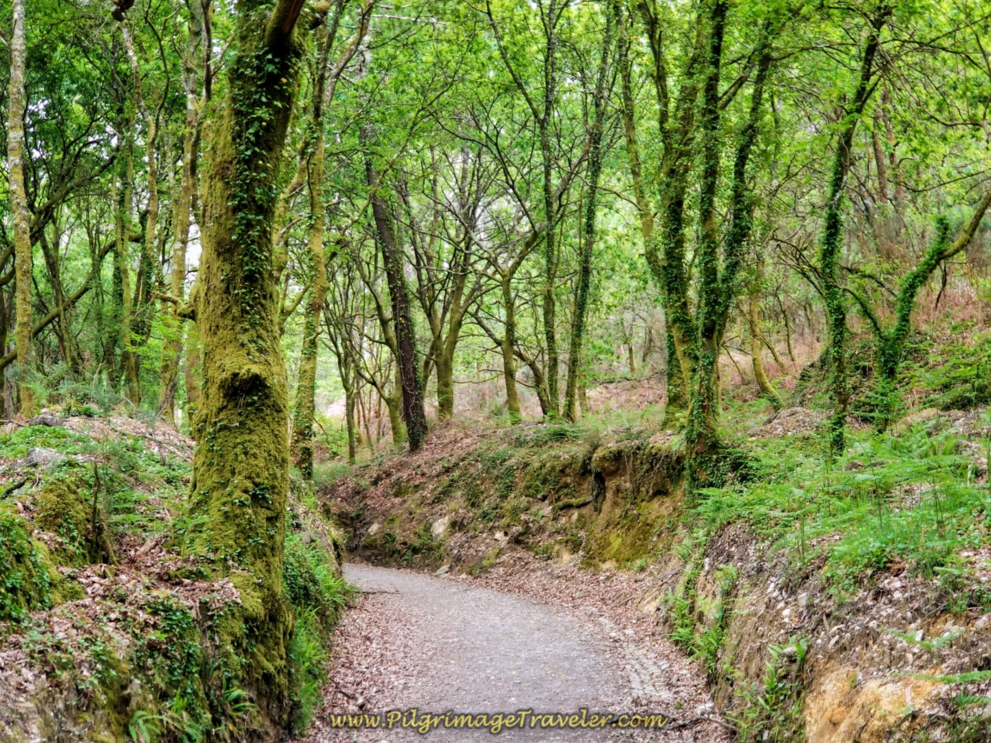 Enchanted Forest in the Spring on day one of the Camino Fisterra