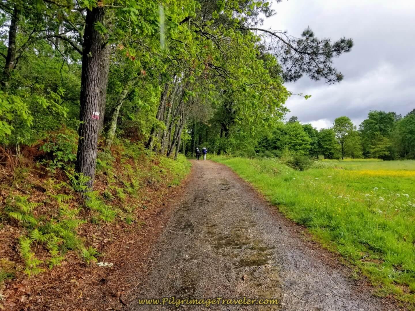 Verdant Country Lane Continues on day twenty on the central route of the Portuguese Camino