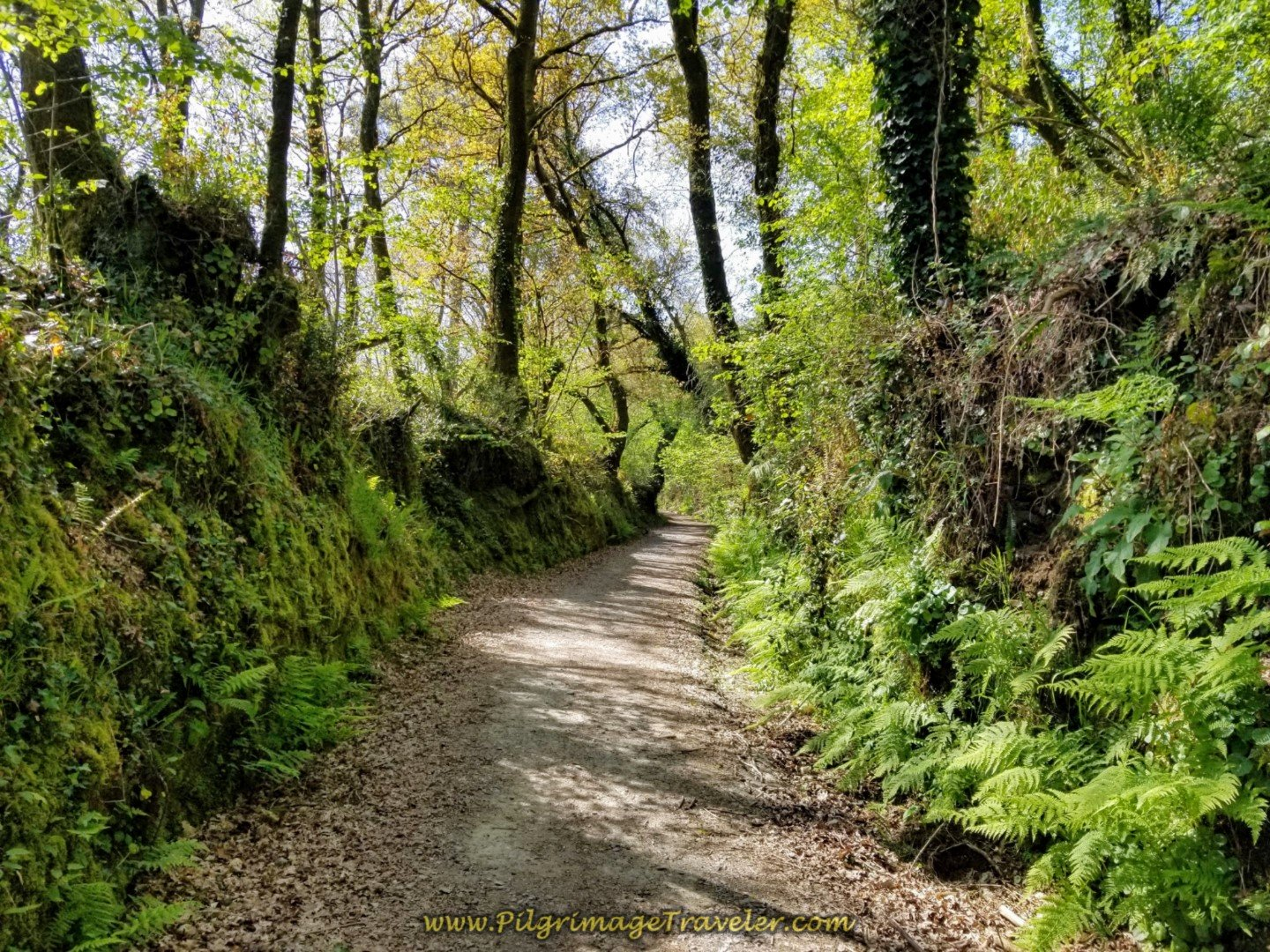 Entering a Lush and Verdant Forest on day seven of the English Way