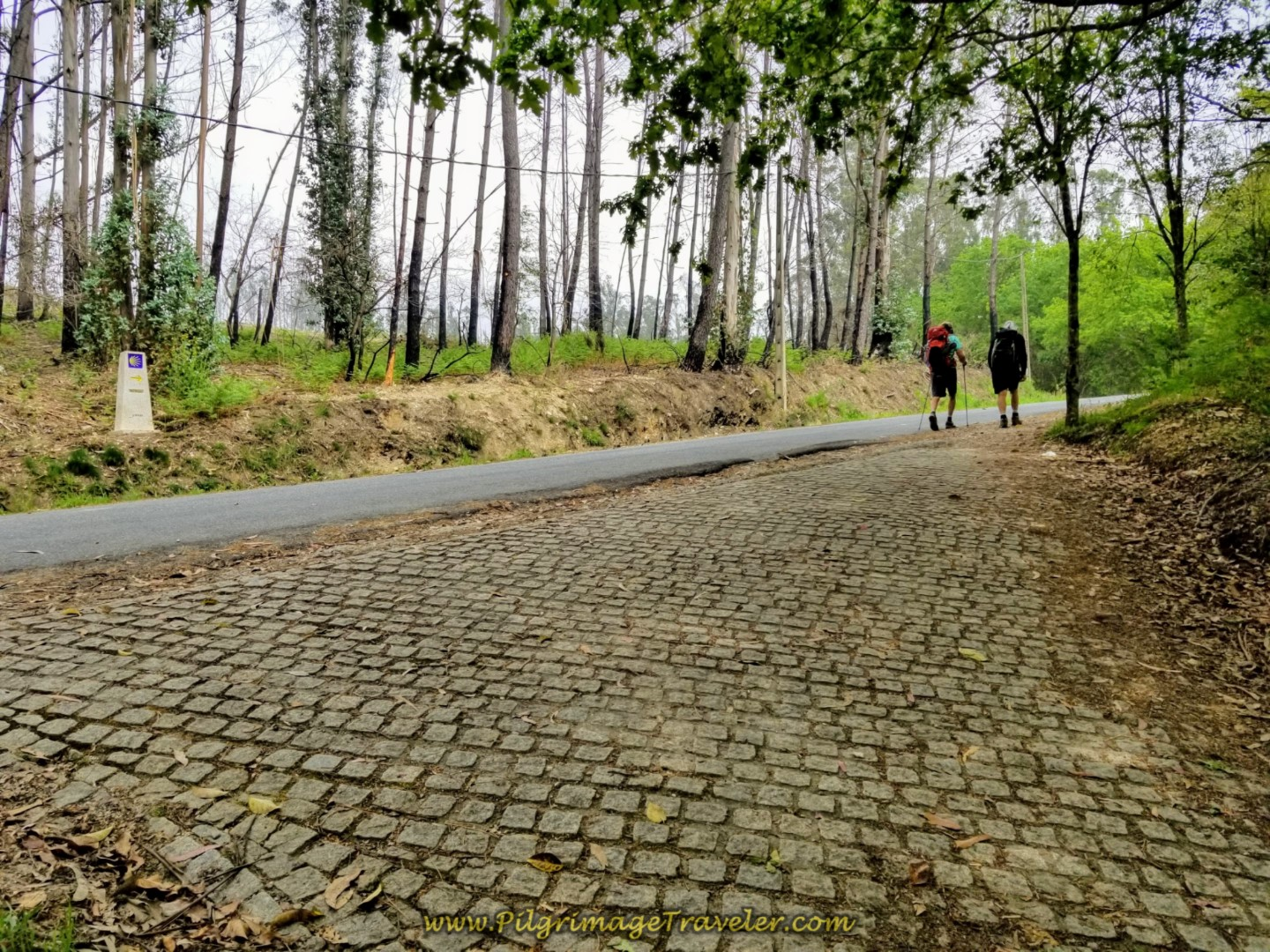 Trail Joins Secondary Road towards Carballo on day one of the Camino Finisterre
