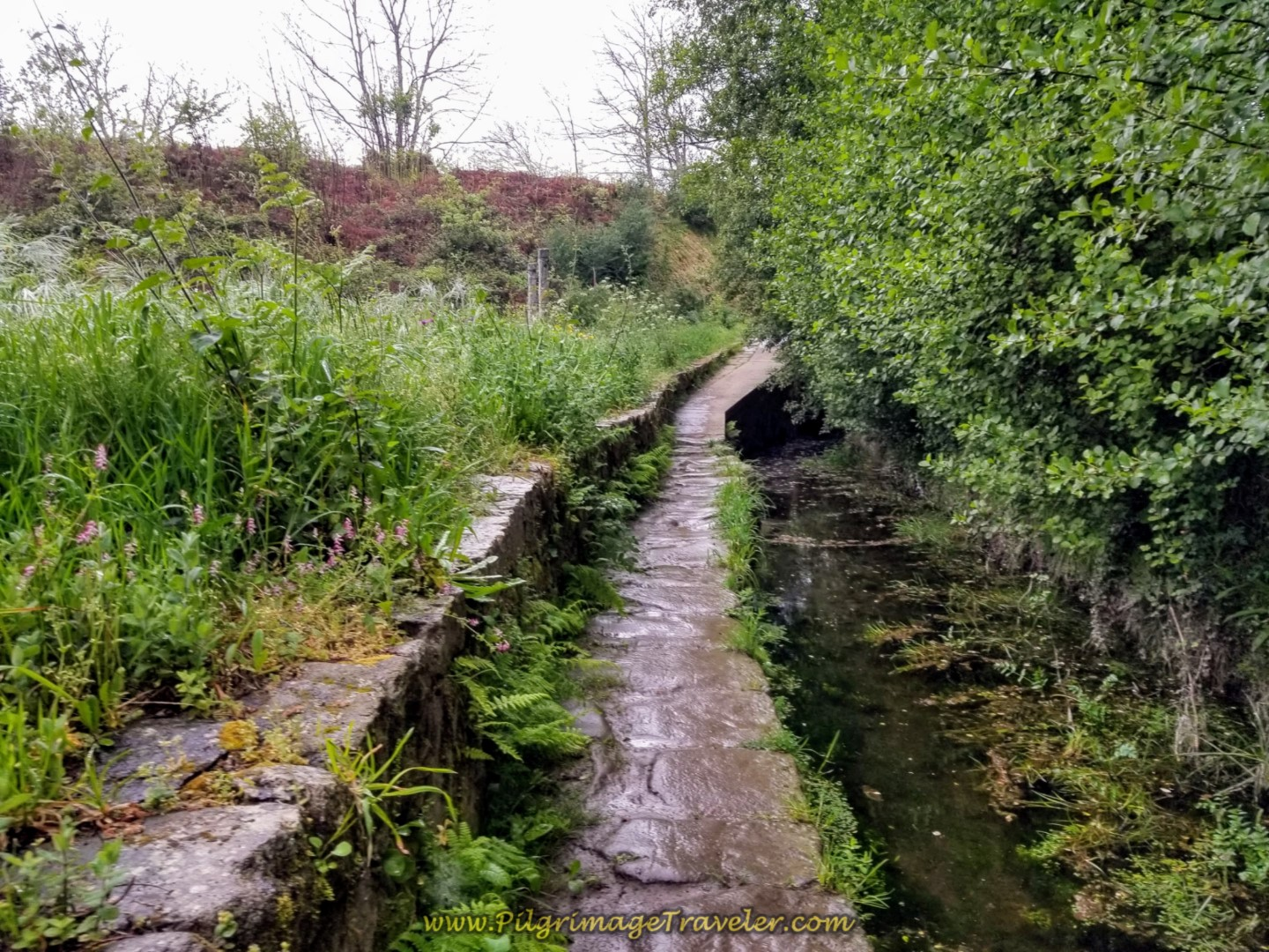 The Path Follows a Canal on Day Eighteen on the Central Route of the Portuguese Camino