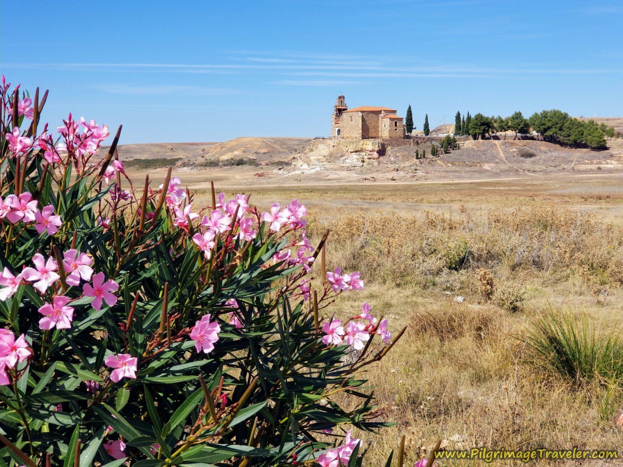 Oleander and the Ermita de la Virgen del Castillo