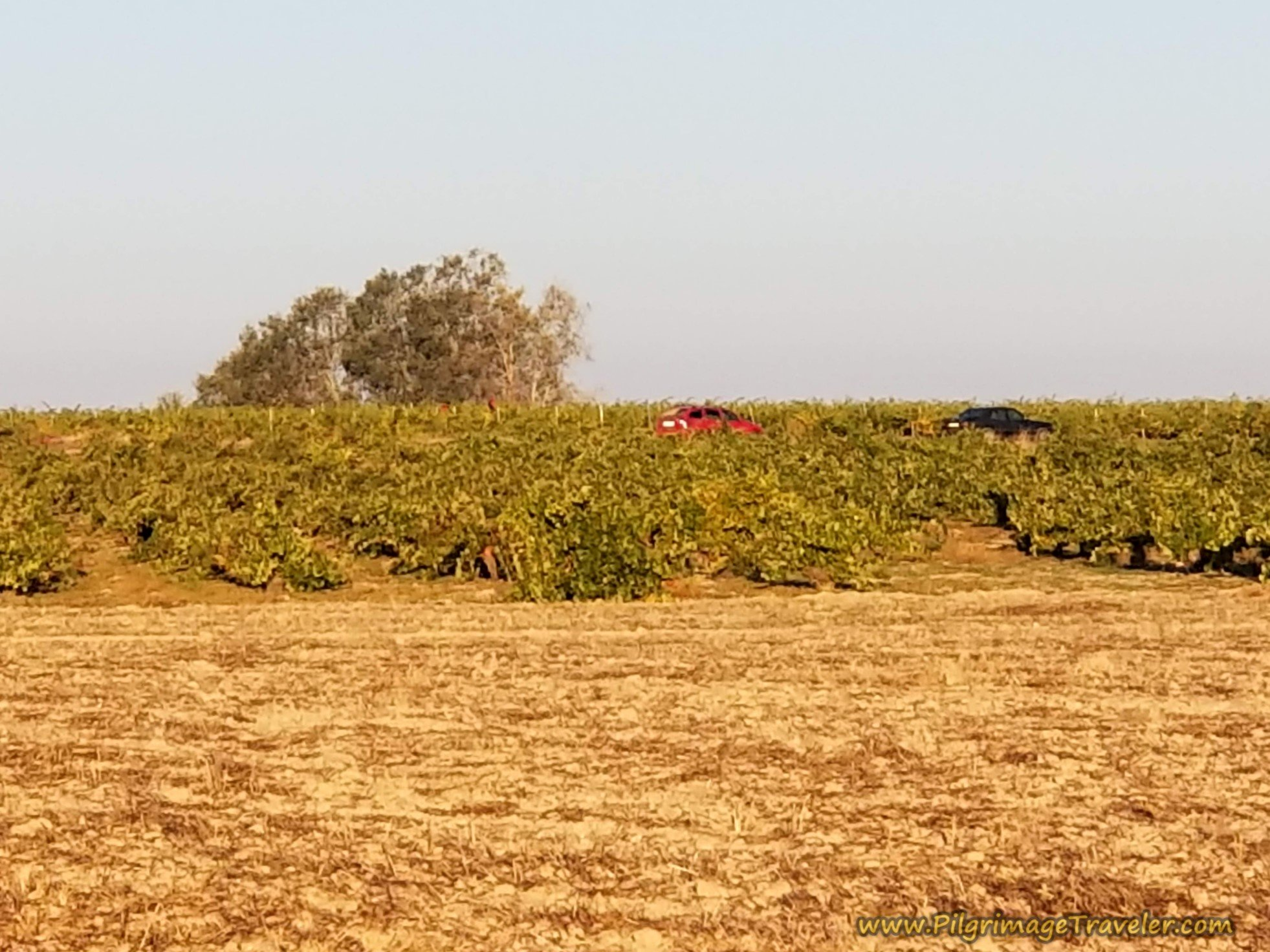 Vineyard Worker's Cars Already in the Fields