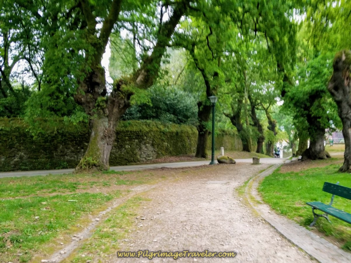 Walk Through Carballeira de San Lourenzo Park in Santiago de Compostela on day one of the Camino Finisterre