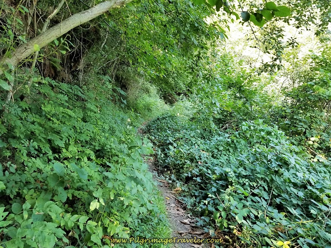 Continue on Overgrown Forest Path