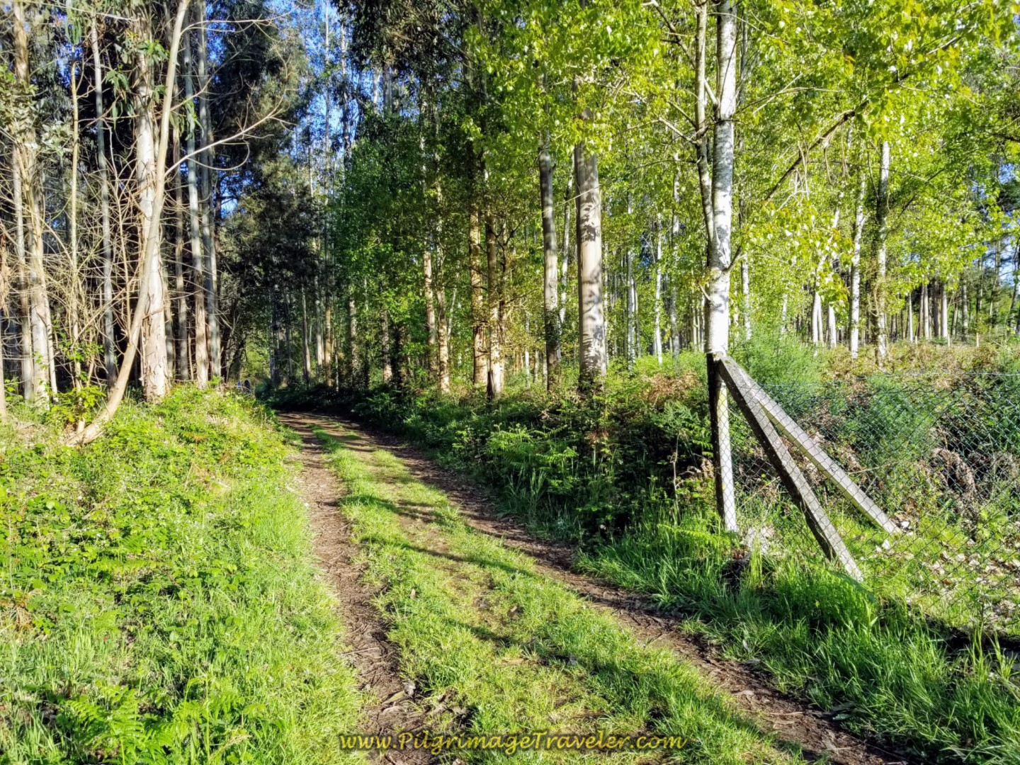 Quaint and Quiet Two-Track Forest Lane on day six of the Camino Inglés
