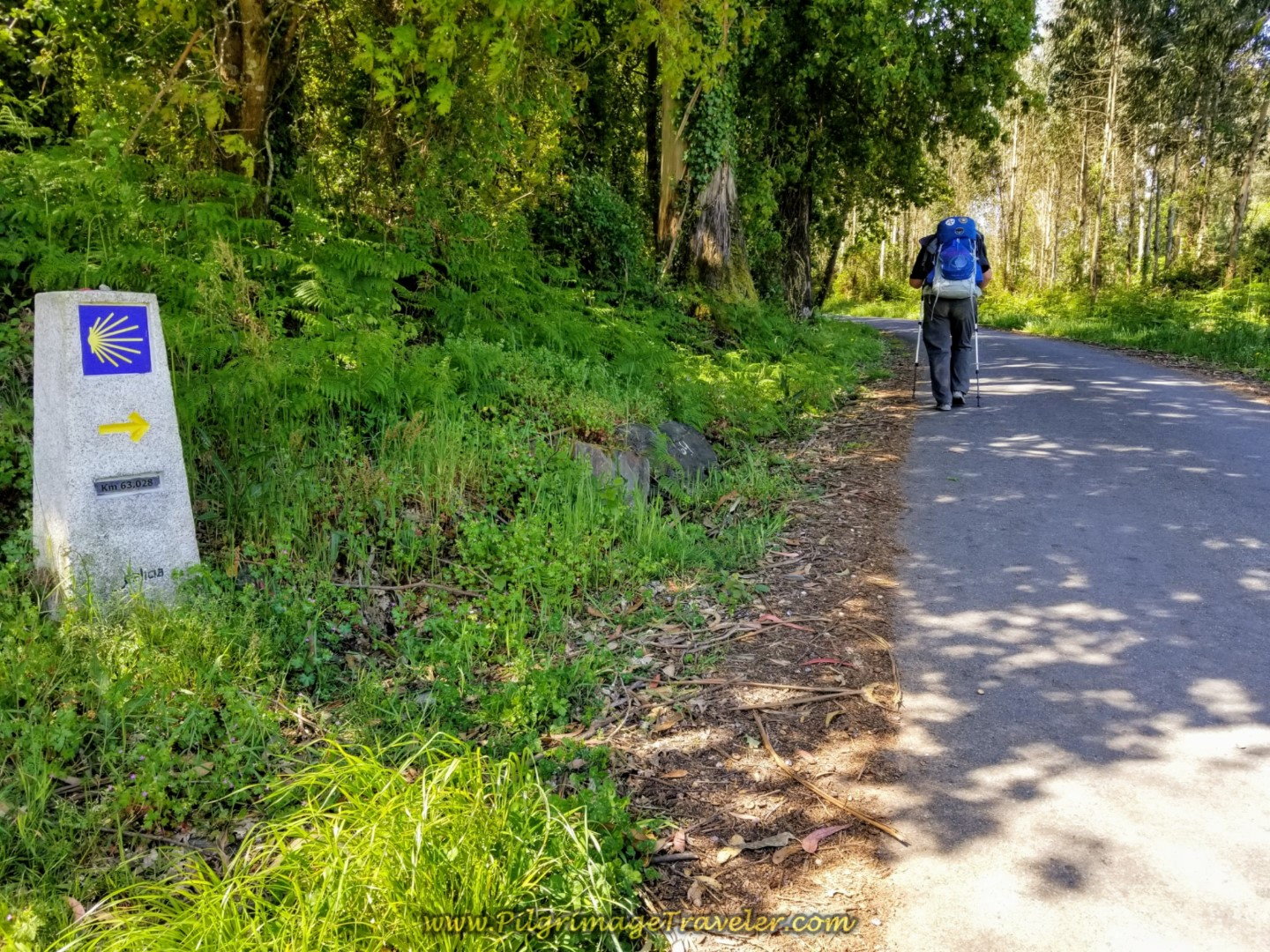 Into the Forest at Kilometer Marker 63 on day five of the Camino Inglés