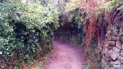 The Vine-Covered, High-Walled Path on Day One, Camino Finisterre