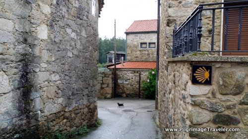 A Waymark on the Wall and The Dog, on Day One of the Camino Finisterre