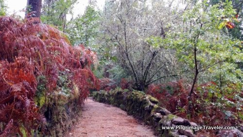 Camino Finisterre through an enchanted forest, Galicia, Spain