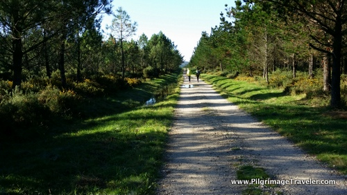 Camino Finisterre, long forest path
