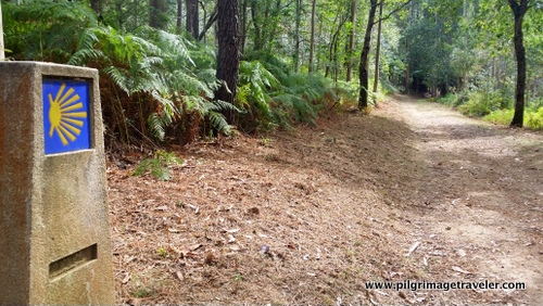 The Way returns to the Eucalyptus Forest
