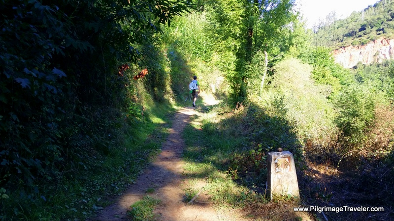 Forest Path, Day Three, Camino Primitivo, Asturias, Spain
