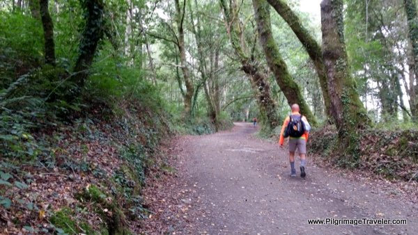 Walking thru cool forest paths on the French Way near Melide, Spain